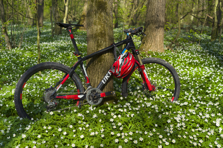 fragrant: Spring summer are on a journey on a bicycle ecological sports transport a lot of fresh herbs and delicate fragrant flowers Anemones against a background of tall trees and clean air sign ecology