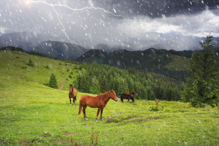 Over the village Verkhovyna Ivano-Frankivsk region in the mountains of Chernogora graze free horses of Ukrainian mountaineers - Hutsul. A thunder storm is coming with lightning  thunder Stock Photo