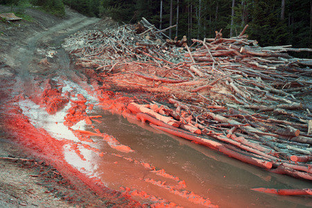 felled: Trekking through the mountains in the Carpathians - an ecological crisis of the brutal destruction of deciduous forests. Beech lie in the swamp, the land is crushed by cross-country vehicles