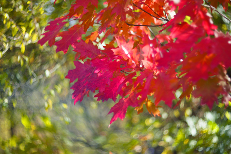 specific: Autumn in Europe covers the slopes of a picturesque decorative carpet of oak and other leaves against the wild wild forest. The picture of the object gives a rare beauty of the side