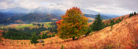 Autumn colors of forests over the mountain villages of the Carpathians - Verkhovyna, krivo pole, Dzembronya, amid the cold snowy ridge high ridge Montenegro - the highest in Ukraine Stock Photo