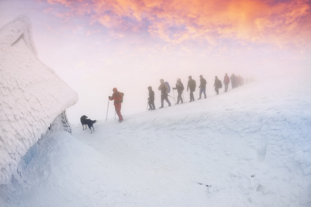 Friendly rural dog are escorted into the storm and fog of climbers tourists in the Carpathians for the New Year during the storming of the highest peak of Hoverla on  Montenegrin ridge