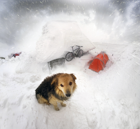 On New Years Eve, bold climbers took a dog and Mountain Carbon Professional bicycle to Goverla Mountain. A severe blizzard on the way to the top of Chernogor near the shelter of the frozen Stock Photo