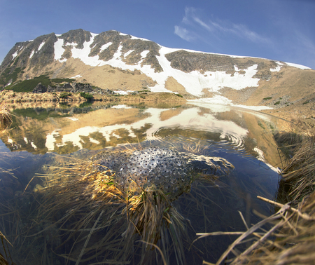 In the Ukrainian Carpathians among alpine meadows at a high altitude lake Berbeneskul Montenegro is located where the end of May the snow melts and frogs toads breed in the icy cold water Banco de Imagens - 102745994