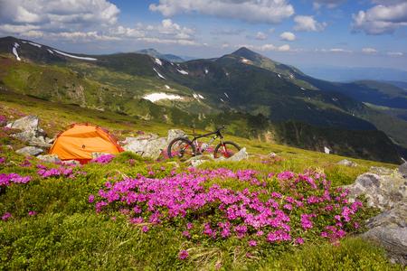 Frühlingsreise in den Karpaten zwischen Alpenblumen mit einem steilen Mountainbike Ukraine und einem hellen Zelt zum Höhenklettern im Hintergrund der wilden schönen Naturwaldwiese