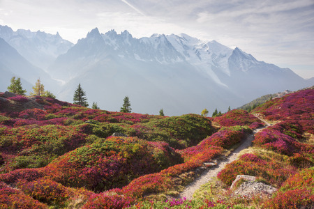 Mont Blanc Chamonix autumn - picturesque meadows of highland berry bushes are fantastically beautiful after the first frosts against the background of the steep peaks of the Alps.