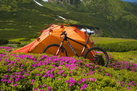 Spring trip in the Carpathians among alpine flowers with a steep mountain bike Ukraine and a bright tent for high-altitude climbing in background of the wild beautiful nature forest meadow