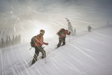 In a strong frosty wind and snowfall, a group of young climbers makes a sports training out to Homyak Mountain in the Carpathians against the backdrop of a wild forest, Ukraine