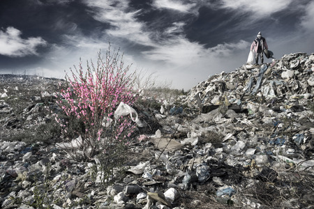 In Europe, a huge trash can, a beautiful sakura tree with delicate pink flowers has grown. A poor man collects plastic bottles in a bag for making money Editorial