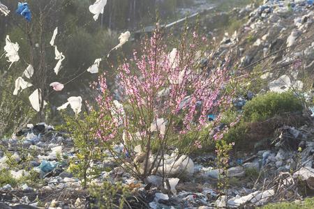En Europa, ha crecido un enorme bote de basura, un hermoso árbol de sakura con delicadas flores rosadas, lleno de botellas, bolsas, polietileno. Un maravilloso símbolo de la victoria de la vida sobre la corrupción. Foto de archivo
