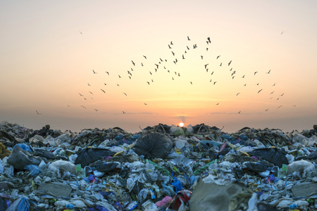 Birds gulls fly over a landfill in Europe, like over a huge sea of garbage in search of food. Waste lies thickly up to the forest, attracting birds and rodents Editorial