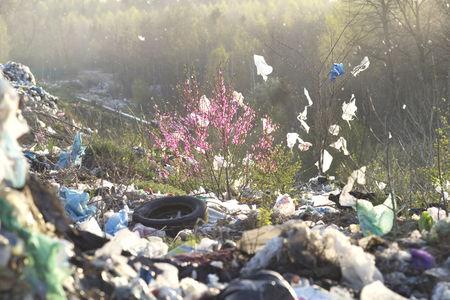 In Europe, a huge trash can, a beautiful sakura tree with delicate pink flowers has grown  Heaped up with bottles, bags, polyethylene . A wonderful symbol of the victory of life over corruption. Editorial