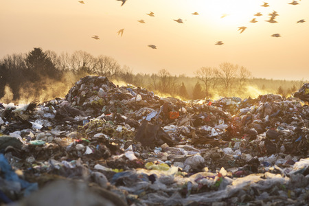 Sunrise on a huge trash can after a fire. Smoke and steam, poisonous gases and fumes escape from the waste of the city in the sunlight of dawn, harm the environment. Gulls over a pile of garbage.