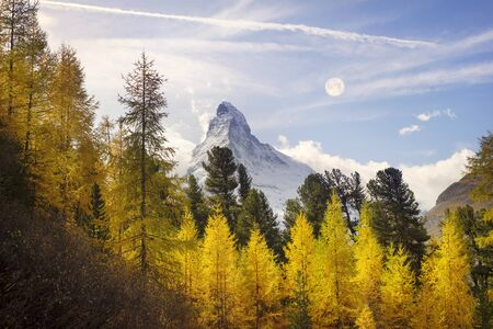 The golden fall colors of larch forests blend beautifully with the snowy Matterhorn glaciers in Switzerland, over the valley of the resort town of Zarmat
