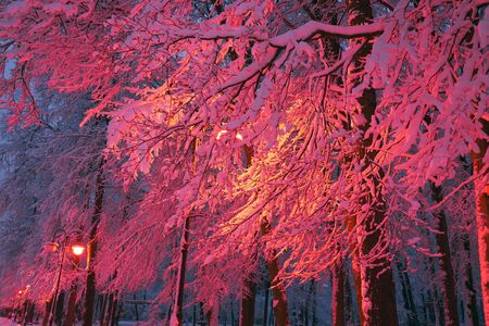 After a heavy snowfall, the fabulous beauty of the morning winter old park in Europe, Ukraine among the beautiful white oak trees pathways and roads illuminated by lanterns 写真素材