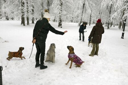 After a heavy snowfall, the fabulous beauty of the morning winter old park in Europe attracts the townspeople with their pets to trek along the roads and paths among the beautiful white trees