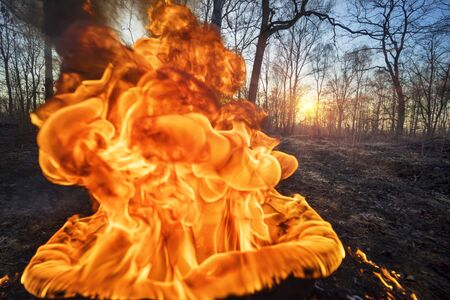 Arson of dry grass leads to mass fires, the death of plants and animals, birds, the destruction of forests, houses burn. Poisonous gases, carcinogen, are released into the air. Burning wheel, tire after a fire in the forest at sunset Stock fotó
