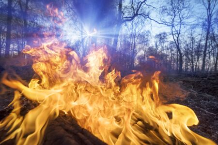 Arson of dry grass leads to mass fires, the death of plants and animals, birds, the destruction of forests, houses burn. Poisonous gases, carcinogen, are released into the air.