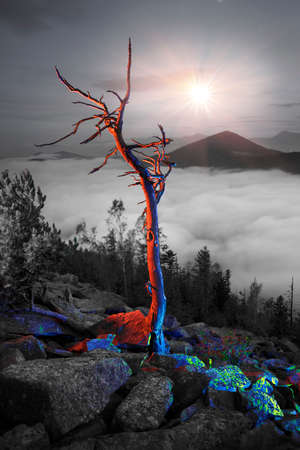 On the top of a mountain in the Carpathians, Ukraine, a fabulous dry cedar tree against the backdrop of the starry sky. Beautiful art illumination looks fantastic
