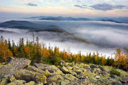 On the top of a mountain in the Carpathians, Ukraine, birch and coniferous forest against the background of the sunrise. In the valley, the sea of fog after the rains in the river valley 版權商用圖片