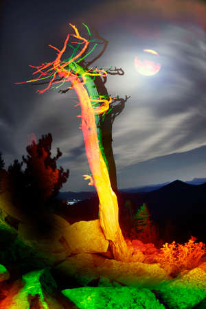 An old dry cedar tree in the Rocky Mountains of the United States of America - USA, illuminated by the light of a campfire, against the backdrop of a moonlit night.