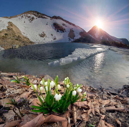 New life in spring in the mountains of the Alps, Carpathians and Tatras with beautiful snowdrops against the backdrop of snowy peaks and lakes. The wild, uninhabited nature is beautiful.