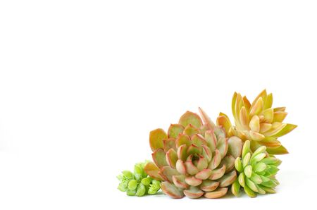 Arrangement of various types of red and green succulent flowering houseplants white background