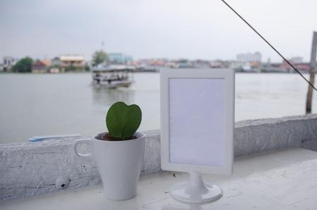 cactus of thailand  photo