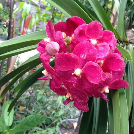 decor: Orchid in garden