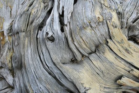 treetrunk: weathered  twisted pine wood background texture Stock Photo