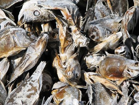 close-up of dead fish on the shore of the Salton Sea Stock Photo - 3287205