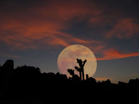 a full moon rises over joshua tree national park at sunset