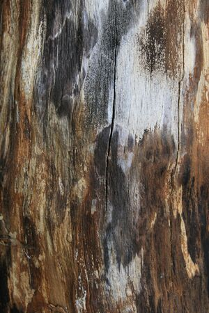 stained split tree trunk background texture Stock Photo - 3424887