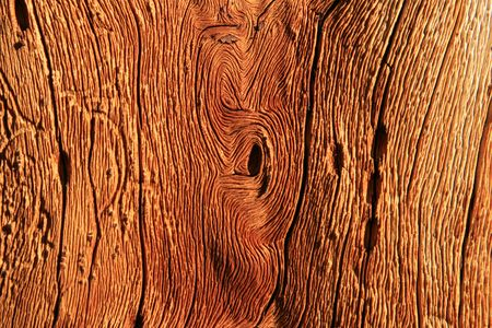 detail of weathered twisted pine wood from a dead alpine pine tree Stock Photo - 3477403