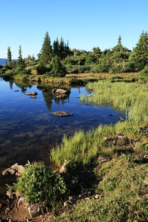 The edge of a small mountain lake with pine trees and reflections Stock Photo