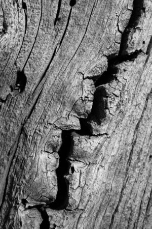 black and white cracked splitting pine wood background texture Stock Photo - 3512904