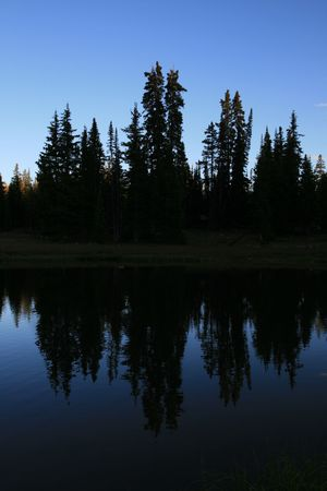 silhouettes of pine trees reflected in a lake in the evening