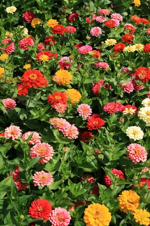 vertical image of colorful flower bed Stock Photo - 3528919