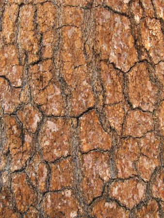 detail of large pine tree trunk bark for background use Stock Photo - 3577975