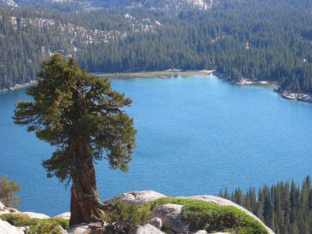 a juniper: occidental de enebro (Juniperus occidentalis) en una c�pula por encima de Tenaya lago, el Parque Nacional de Yosemite