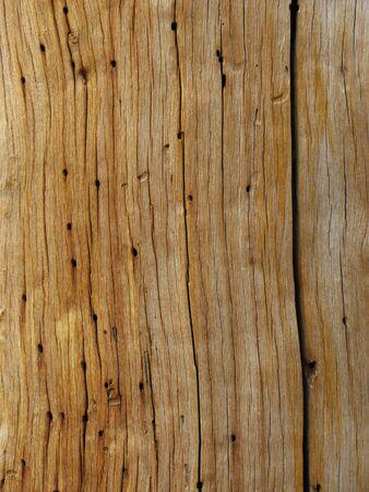 死んでいる松の木の幹の木目を風化します。