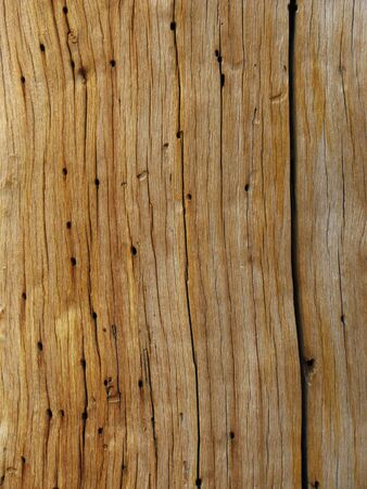 weathered wood grain on a dead pine tree trunk