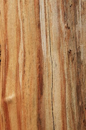 treetrunk: brown and tan wood background with streaks Stock Photo