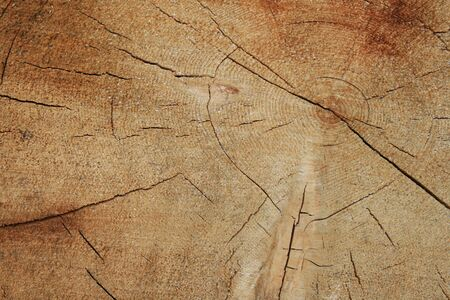 growth rings on the end of a sawn log Stock Photo - 3587399