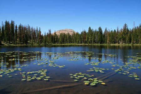 lily pad: mountain pond with water lily pads and bald mountain
