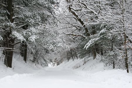 lane bordered by evergreen and deciduous trees with snow on the branches and ground.