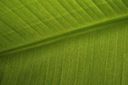 green banana leaf background