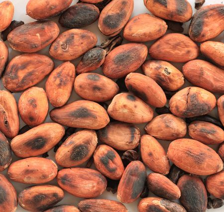 freshly roasted cocoa or cacao beans photo