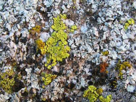 close-up of weathered granite covered with lichen Stock Photo - 3615565