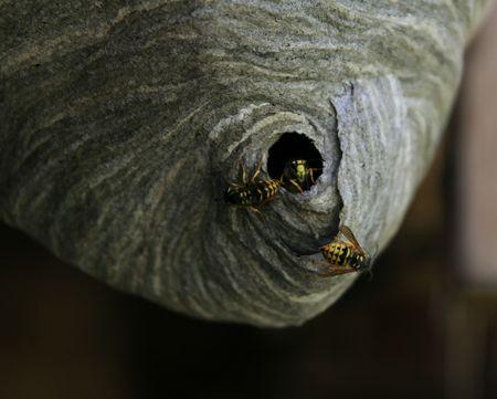 Trois vestes jaunes sortent de leur nid Banque d'images - 3617374